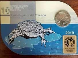 blister rana gigante del titicaca