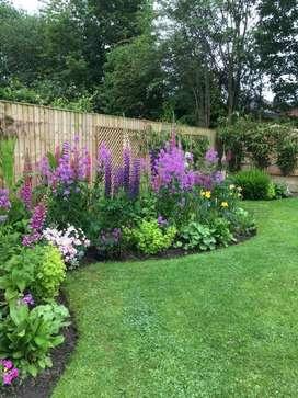 Arreglos de Jardines