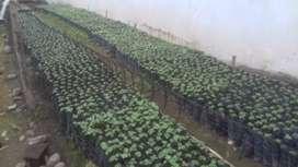 Ventas de plantas de boya