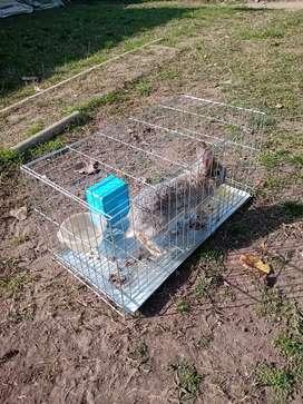 Venta de conejo (con jaula )