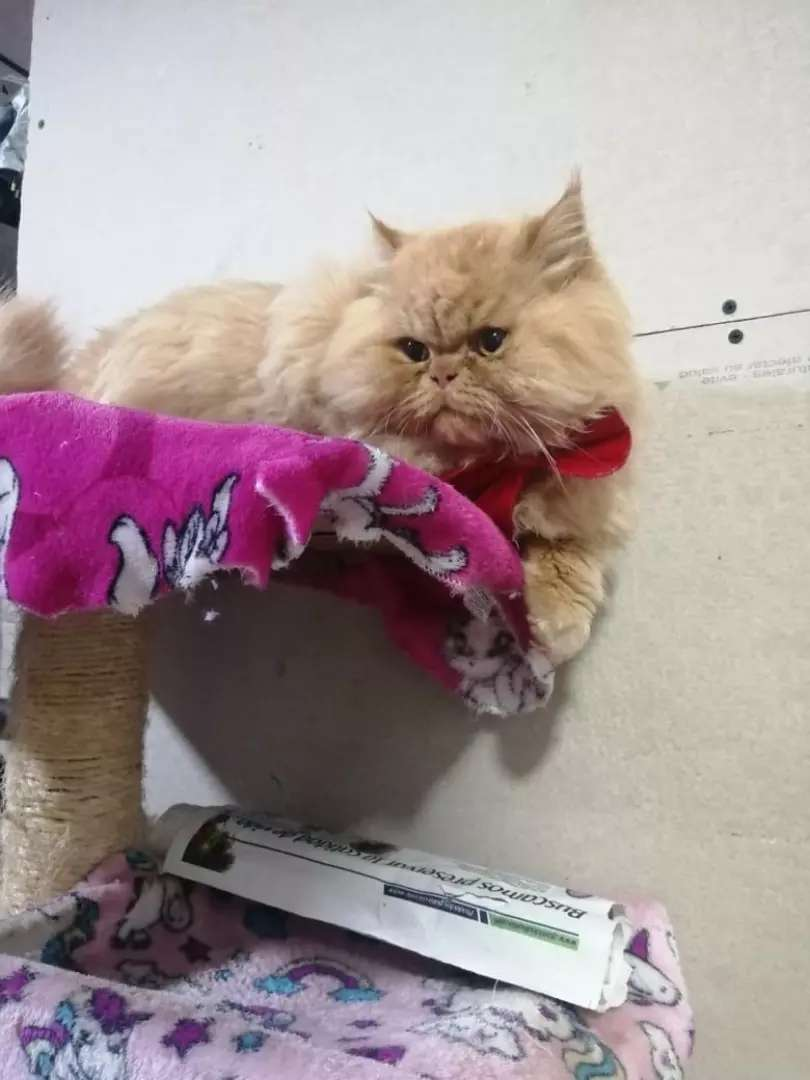 Hermoso gato para monta