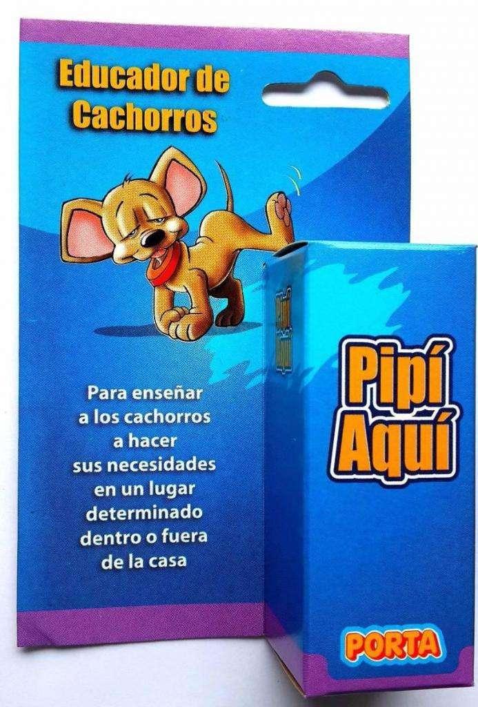 Educador De Cachorros Pipi Aqui Entrena A Tu Perro Gruponatic Independencia 0