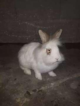 Conejos blancos y marrones
