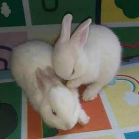 Conejos Cartagena