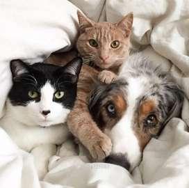 Cuidadores de mascotas
