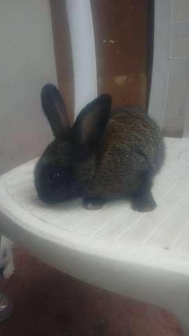 venta de lindos conejos de un mes y medio