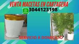 Venta de macetas y plantas en Cartagena Bolivar
