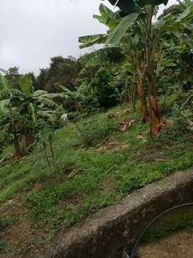 Venta de finca en guaduas Cundinamarca