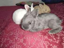 Conejos bebés en venta