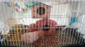 Regalo Hamsters