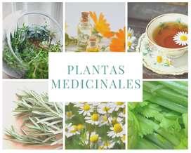 Seminario Online de Plantas Medicinales