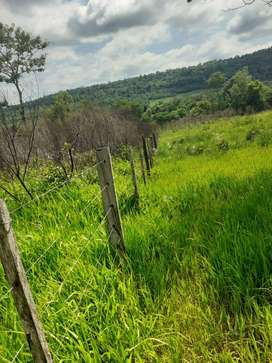 En venta chacra de 100 hectáreas en Wanda misiones