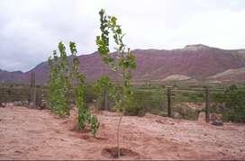 Venta de Terreno en localidad de Amblayo