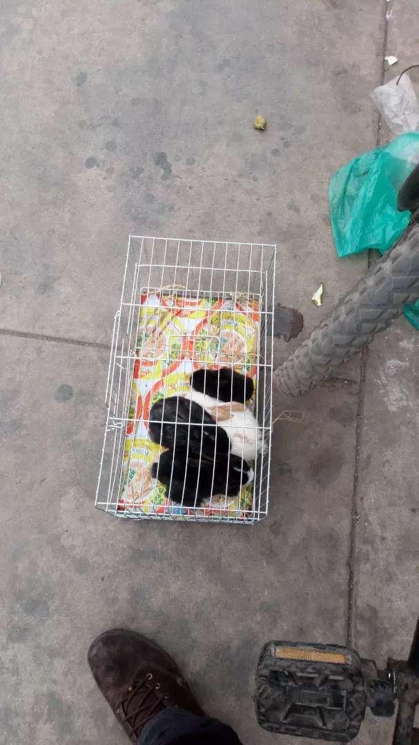 Hamster conejo peces 0