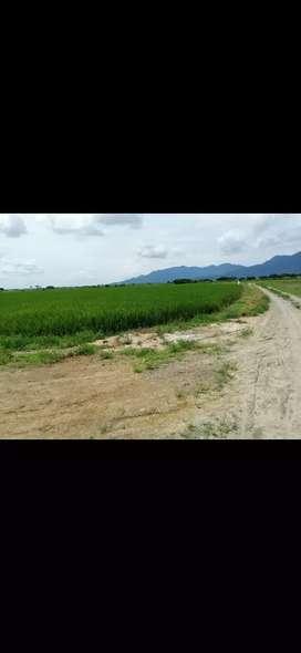 Terreno 65 hectáreas en la vía Guayaquil a Puerto Inca a la vents