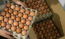 carton huevos AA
