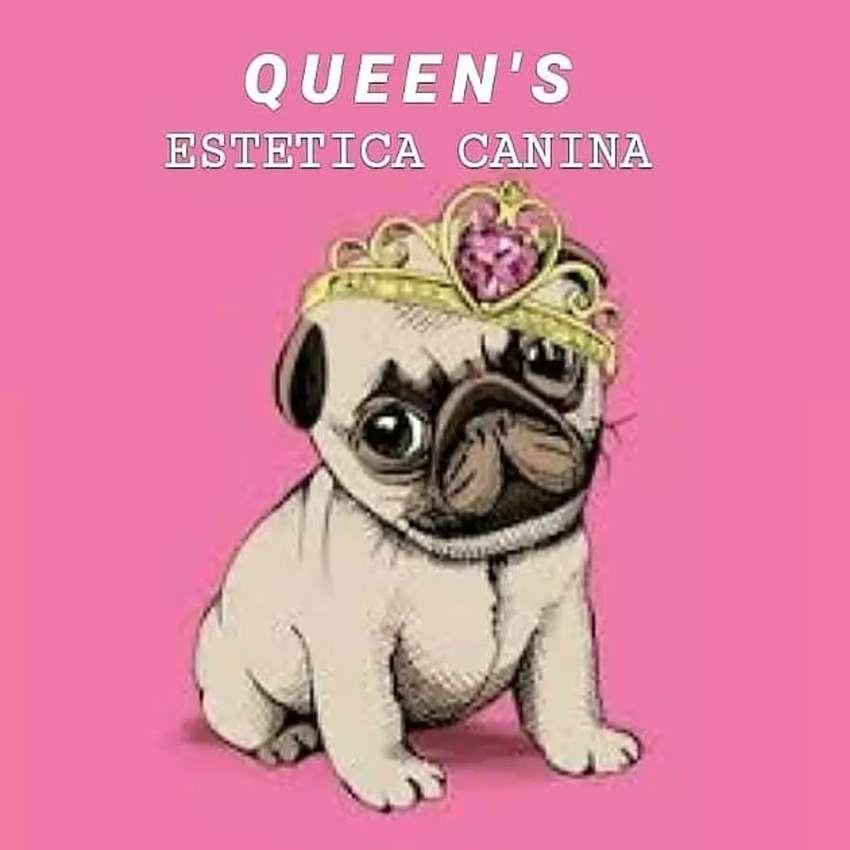QUEEN'S ESTETICA CANINA 0