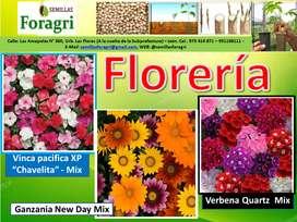 Venta de semillas de flores Chavelita-Ganzania-Verbena