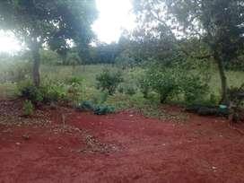 Vendo Chacra 16 hectáreas - Dos de Mayo