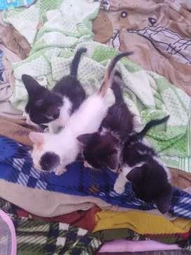 De  da en adopción 4 gatitos