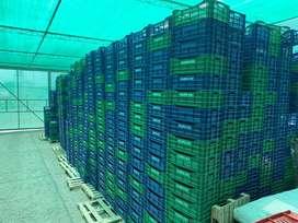3000 jabas cosechadoras de uva
