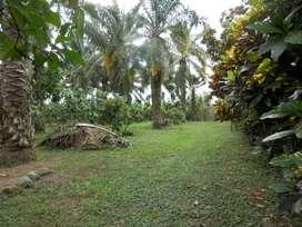 Venta finca de 6 hectareas, en producción, La Independencia - La Union Esmeraldas