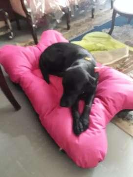 Cama en Lona Impermeable Perros Grandes