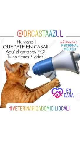 Veterinario para gatos a domicilio quedate en casa