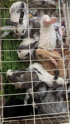 Vendo Conejitos bebés de varias razas