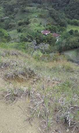Vendo finca en municipio de Caicedo antioquia