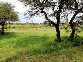 Venta de terreno en Monje. Delta del bucare