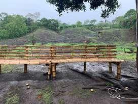 Vendo Finca en Produccion de Cacao en Balzar via El Empalme