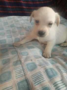 Mini cachorrito.