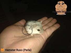 Hamster Ruso Blanco Perla