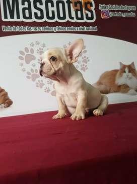 Fantástico niños y niñas bulldog francés