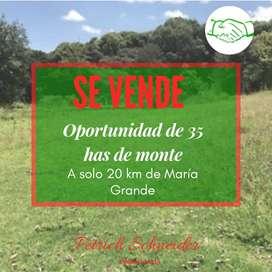 SE VENDEN  35 HAS DE MONTE A 20 KM DE MARÍA GRANDE(PARANÁ-ENTRE RÍOS)