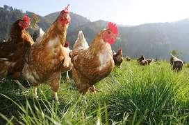 Huevos 100% organicos de corral