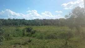 Dos hectáreas