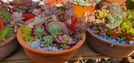 Venta de arreglos florales y suculentas