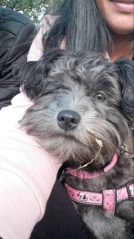 Doy en adopción cachorra su nombre es  Habby