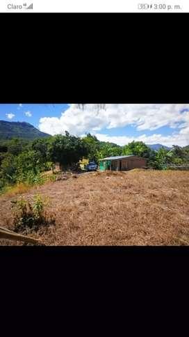SE VENDE FINCA  VEREDA EL PELIGRO,  3 hectáreas y media