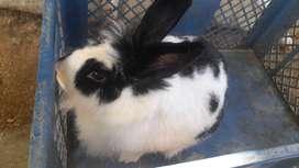 Increíbles Conejos Disponibles la próxima semana. Separa el tuyo.