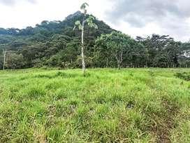En venta finca de 23 hectáreas en Guadalupe