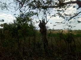 Vendo 30 hectareas excelente ubicacion ión y