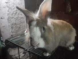 Se venden conejos de raza