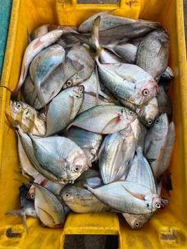 Pescado fresco del mar a su meza