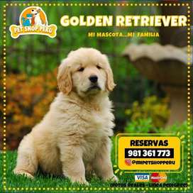 GOLDEN RETRIEVER A1