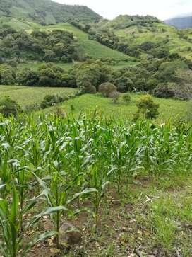 Se vende Huerta con riego en San Antonio cantón Paltas