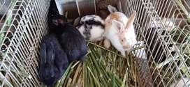 Venta de conejos !!!