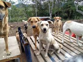 Mayordomo para finca experiencia en cuidado de animales